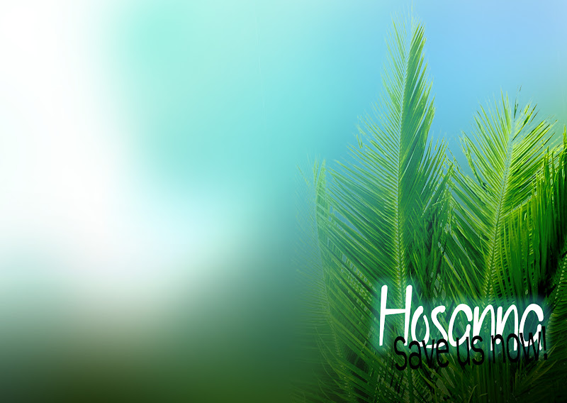 Happy Palm Sunday whatsapp Dp fb profile cover hd wallpaper