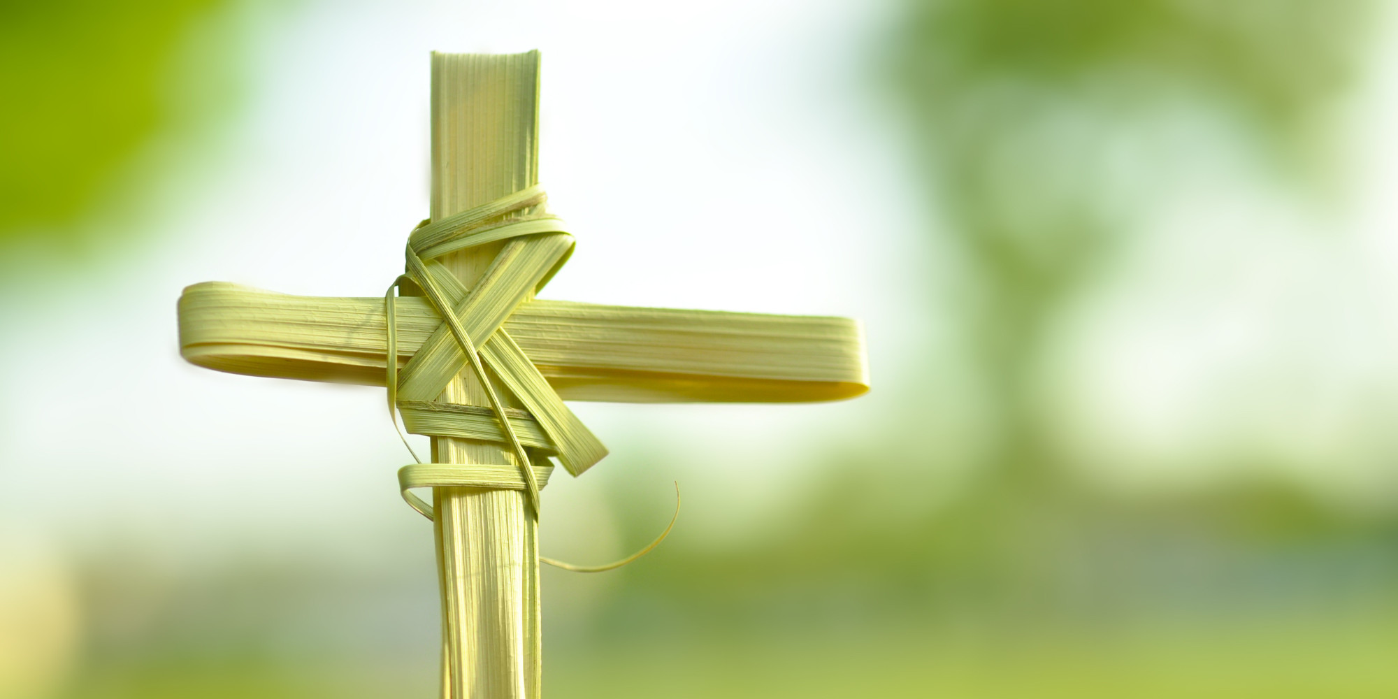 Happy Palm Sunday 2019 Whatsapp Status Dp fb Profile Cover ... - photo#35