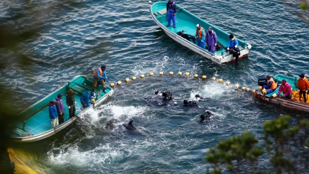 Stop-Buying-Taiji-Dolphins-Japanese-Aquariums-Vote-For-It