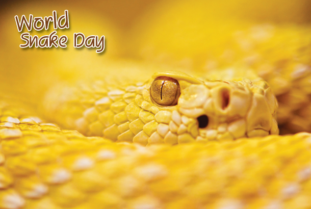 World Snake Day