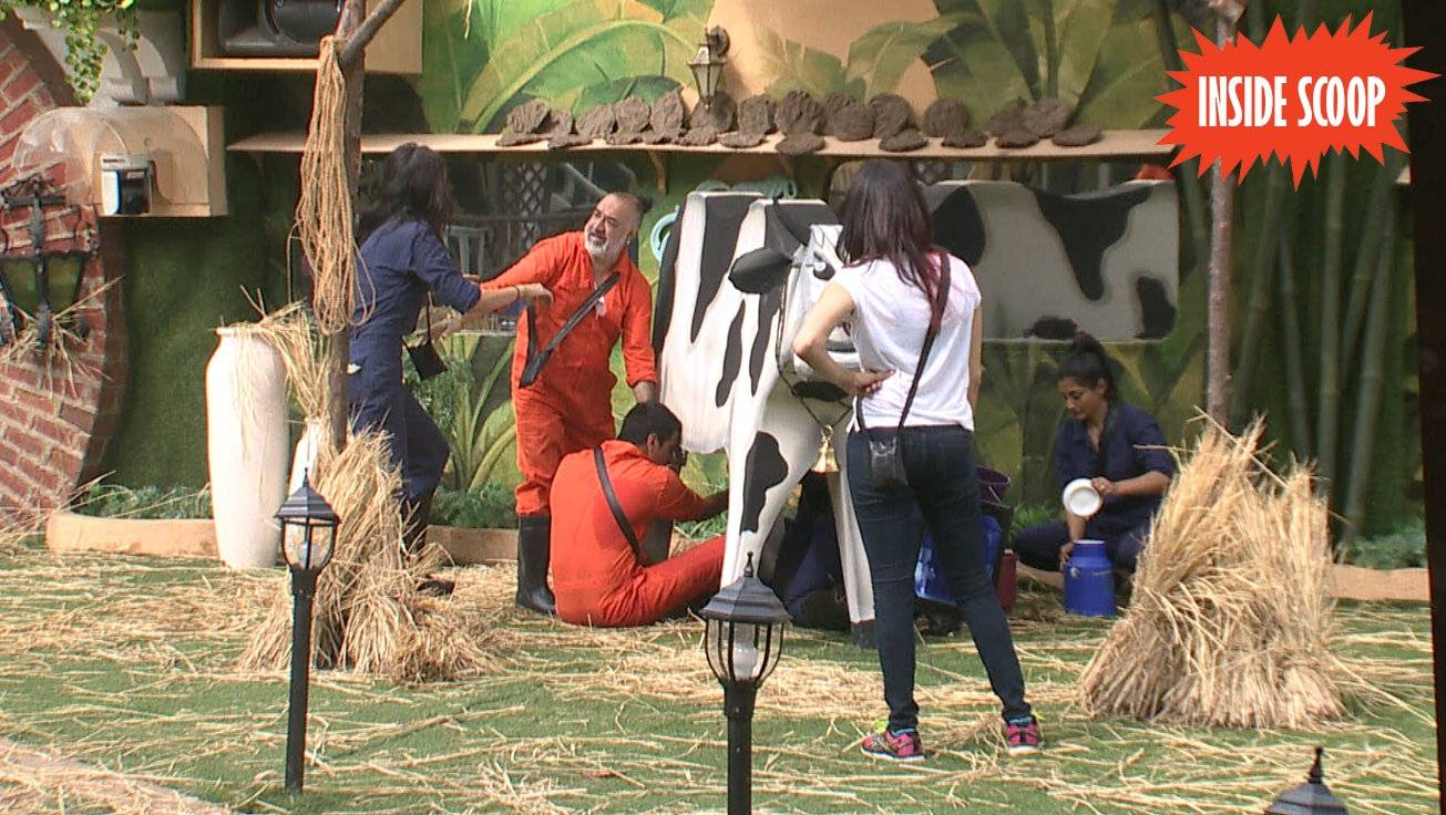 Prince Team Win BB Dairy Task Bigg Boss 9 25th November 2015 Episode Written Updates