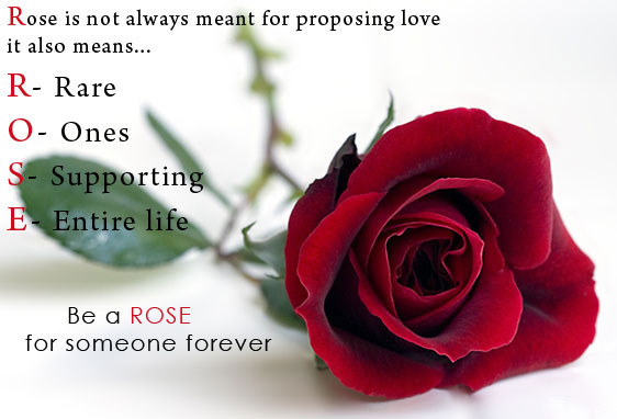 Happy-Rose-Day-2016-HD-Wallpapers-Images-and-Quotes_01