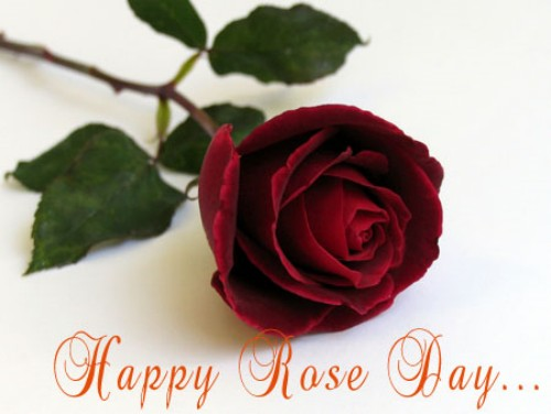 happy-rose-day-16