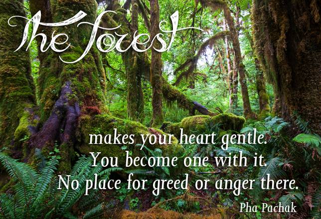 International Day Of Forests 2019 Quotes Sayings Slogans