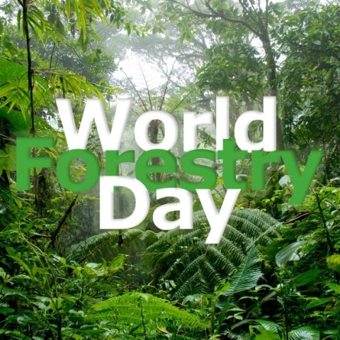 World-Forest-Day