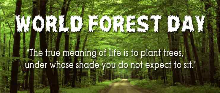 forestday-limg