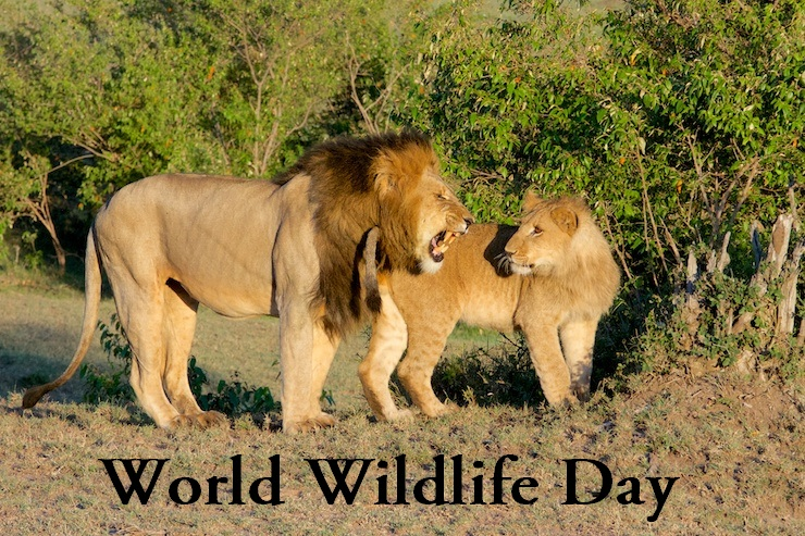 happy_world_wildlife_day_quotes_2197643863