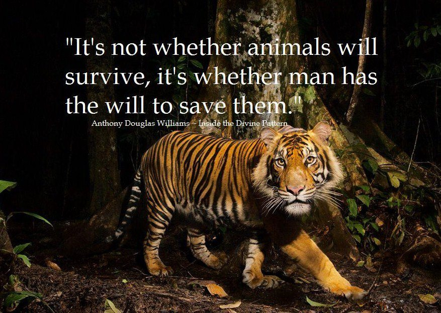 Beautiful Slogans Nature And Animal Conservation
