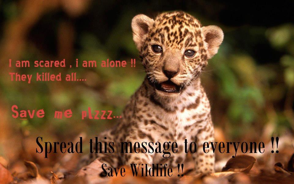 save-wildlife