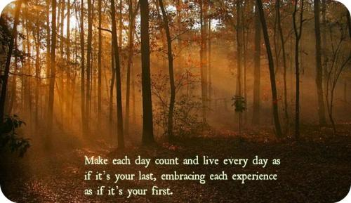 forest day quotes