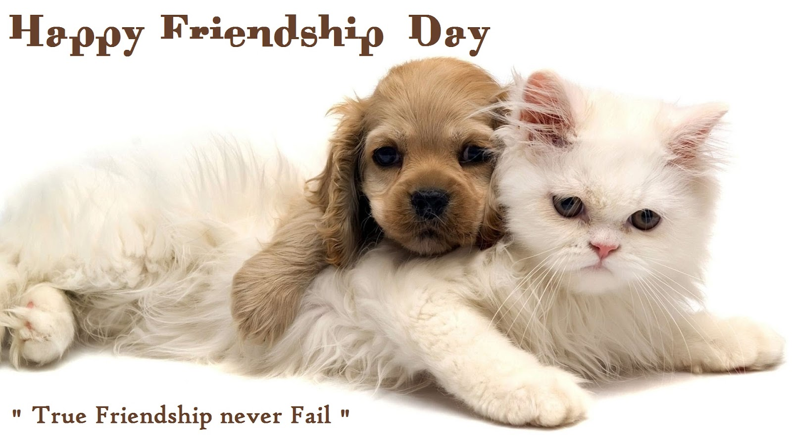 friendship-day-cute-cat-dog-wallpapers