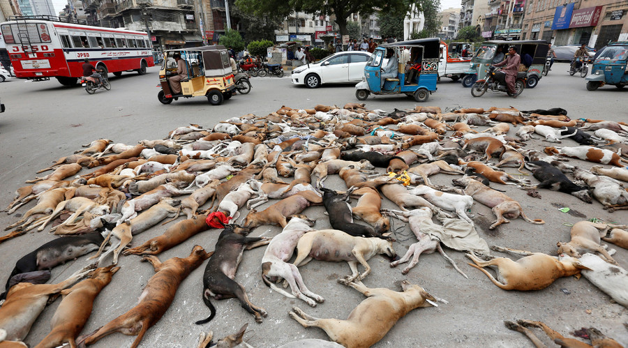 Over 700 stray dogs poisoned in Pakistani city of Karachi