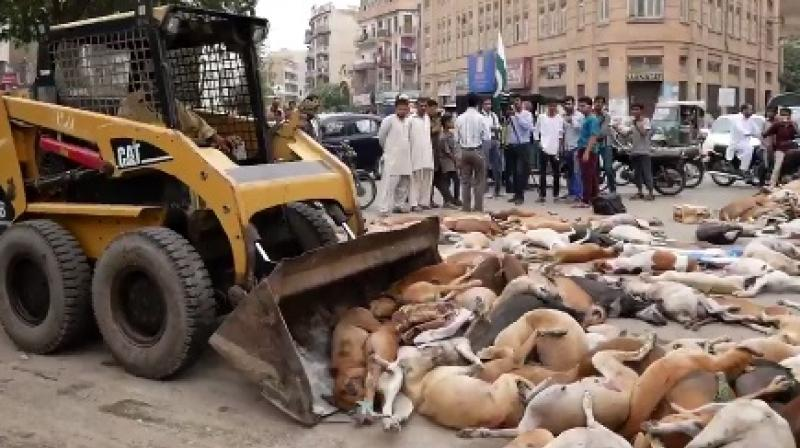 Over 700 stray dogs poisoned in Pakistani city of Karachi1