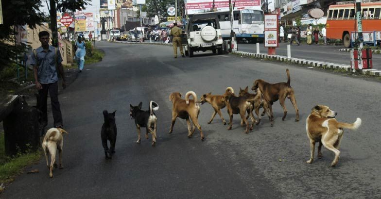 Stray dogs attack, eat 65 year old woman; she succumbs to injuries