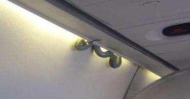 green-snake-on-plane