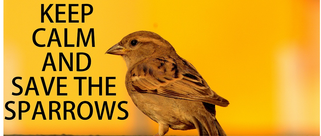 World Sparrow Day 2018: Why is it Celebrated & Interesting facts about the 'familiar' bird