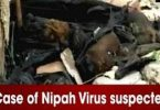 LIVE Nipah Virus: 18 Dead Bats Found in HP's Nahan District