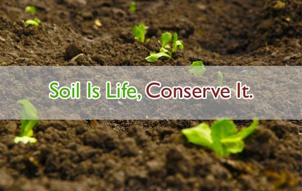 World Soil Day 2019 Theme, Quotes, Slogan, Poster, Status, Images & Pictures