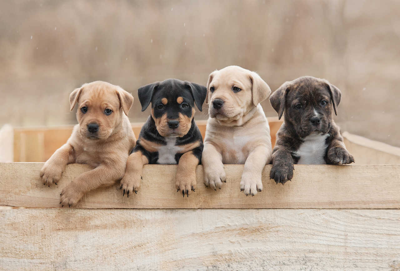 Top Best Male and Female Dog Names - Pick most popular Boy & Girl